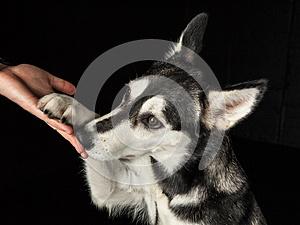 cute-dog-27990076